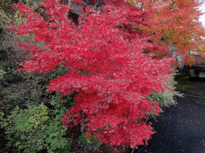 monte oyama momiji mezcla tonos rojizos amarillos y verdes