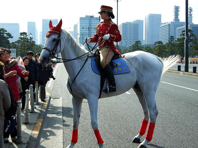 palacio imperial tokio caballo