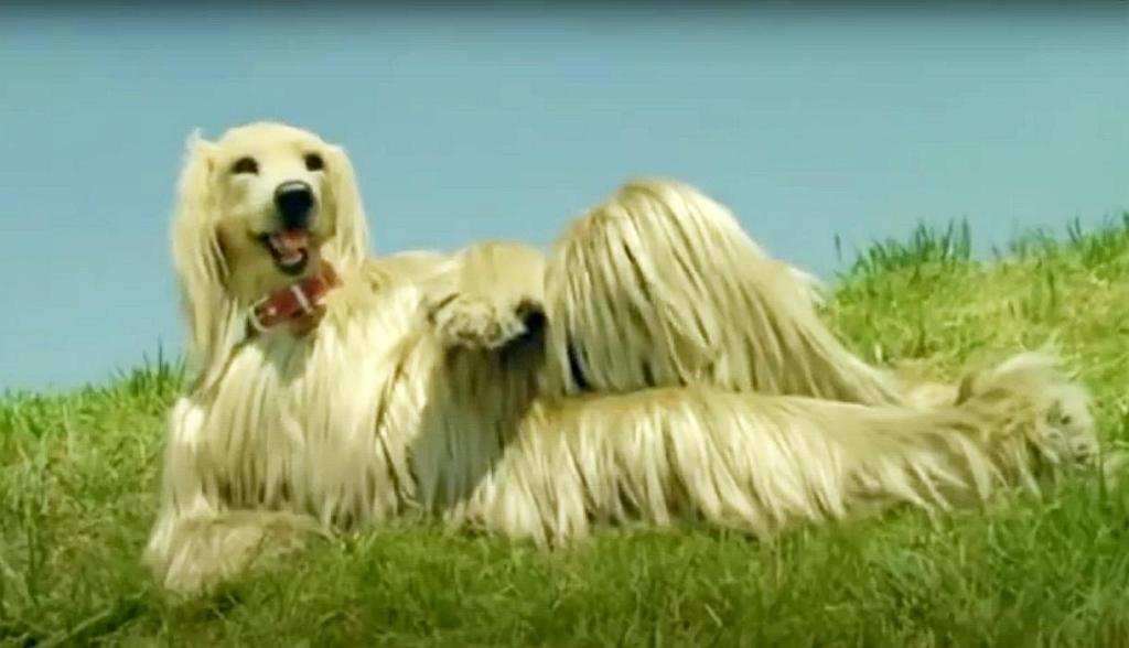 Cara de sorpresa del perro del anuncio de Consome Panchi, las patatas fritas de la marca japonesa Calbee