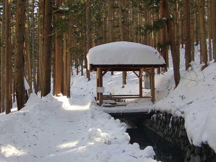 Camino desde Kanbayashi Onsen hacia la entrada del Snow Moneky Park. 1,6 kilometros