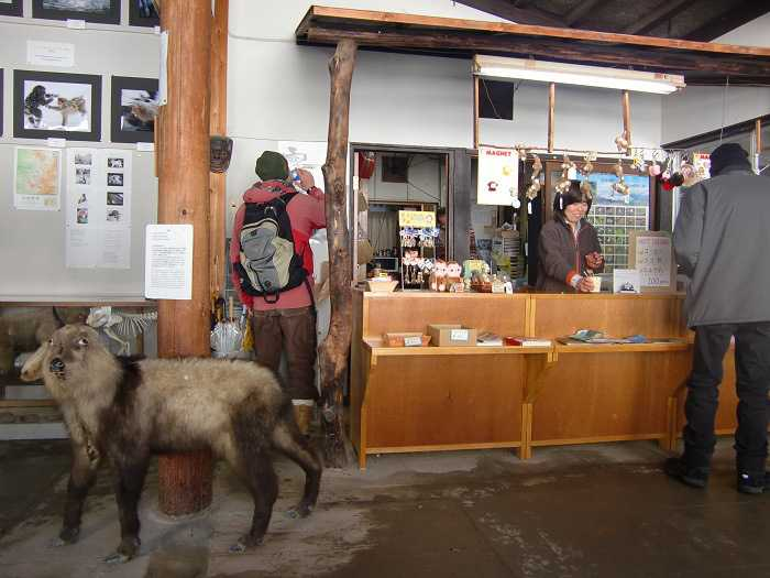Snow Monkey Park. Tomando un cafe en el refugio