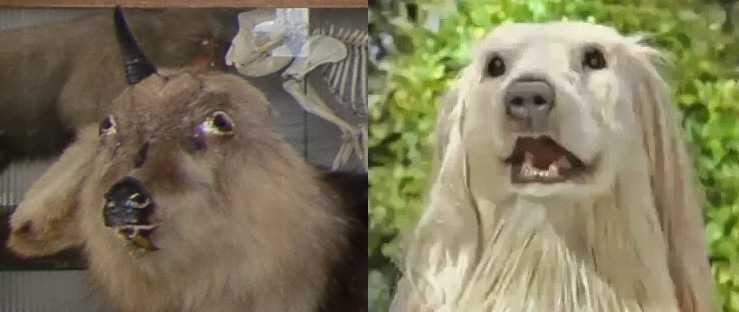 Comparacion de los Snow Monkeys con el perro de Consome Panchi