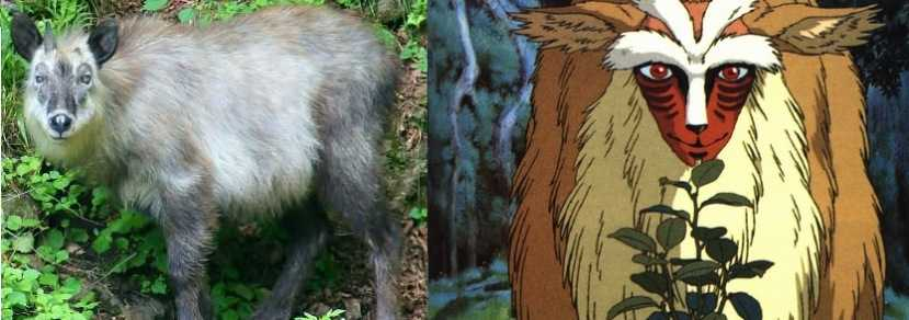 Comparacion de los Snow Monkeys con la princesa Mononoke