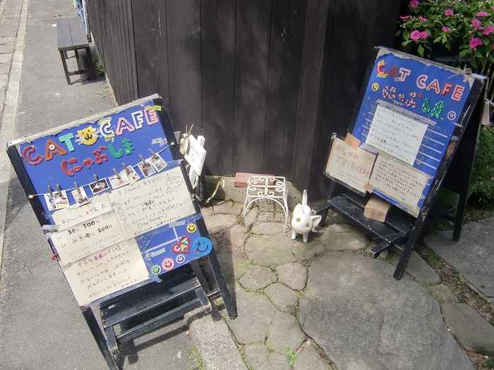Naoshima Cafe gatos