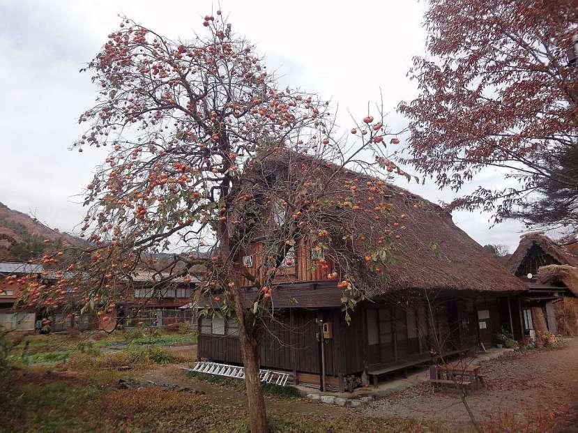 shirakawa minka casas arquitectura gasshou zukuri 11