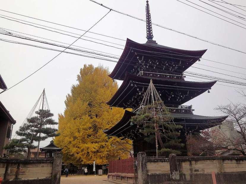 takayama templo Hida Kokubun-Ji pagoda ginko biloba afbol