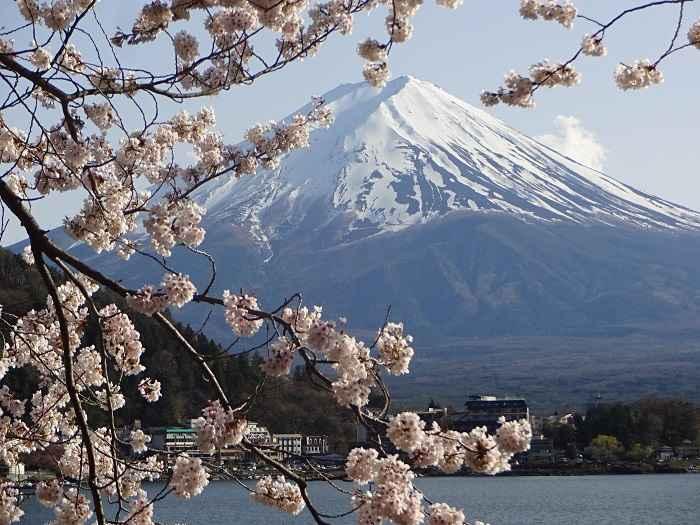 kagaguchiko fuji sakura