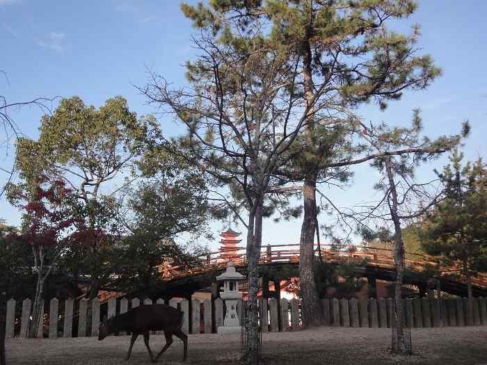 Itsukushima shrine parque