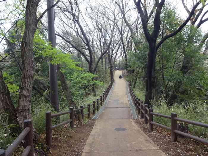 Ikuta Ryokuchi senderismo 2