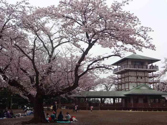 Ikuta Ryokuchi templo sakura