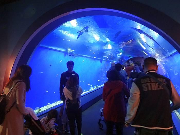 osaka acuario tunel