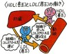 colesterol hdl ldl japon portada